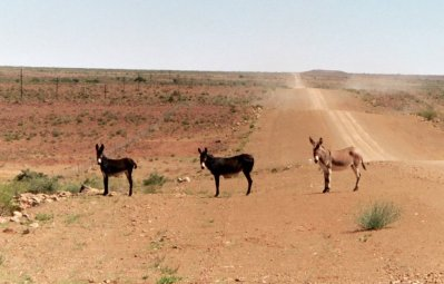 Roadside Donkeys