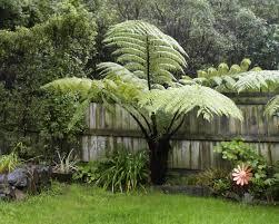 garden tree fern