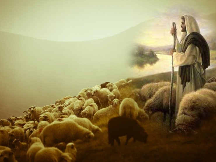 good-shepherd sheep of his pasture